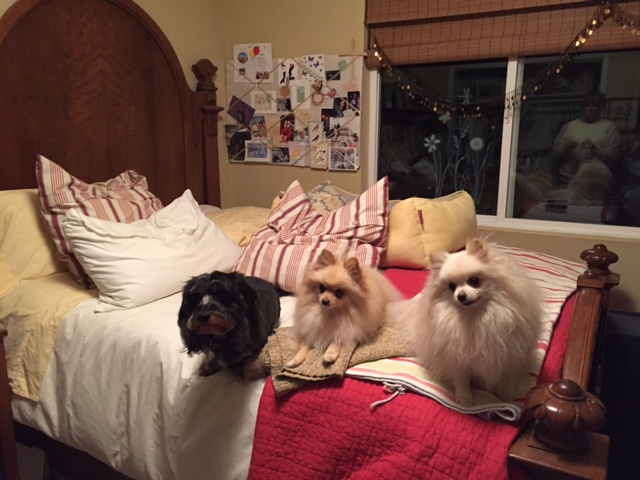 Mr. Winston, Sophie and Rocky