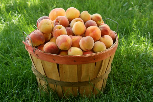 Honey Mommy Peaches